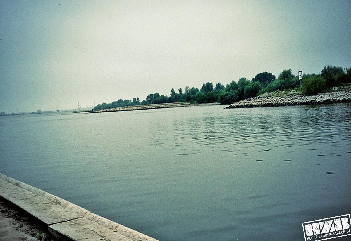 Rhein-Hauptbild